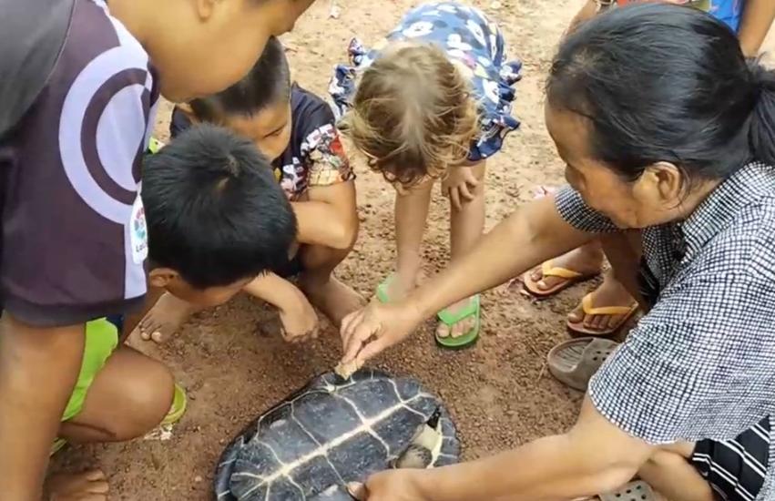 เต่าตัวใหญ่ซุกใต้ท้องรถ
